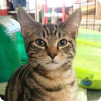 Adopt A Pet :: Abracadabra - Fairfax, VA