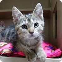 Adopt A Pet :: Frost - Lloydminster, AB