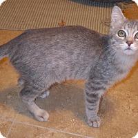 Adopt A Pet :: Treat - Quail Valley, CA
