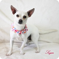 Adopt A Pet :: Sugar - Dalton, GA