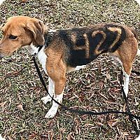 Adopt A Pet :: Sienna and Violet - Mt. Laurel, NJ