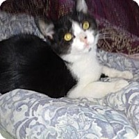 Adopt A Pet :: Jingles - Medford, NJ