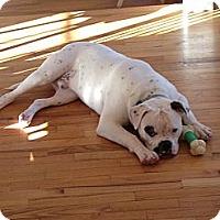 Adopt A Pet :: BANE - Mahopac, NY