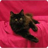 Adopt A Pet :: Emily - Sacramento, CA