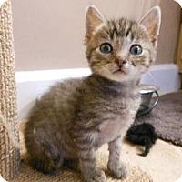 Adopt A Pet :: Elvis - Reston, VA