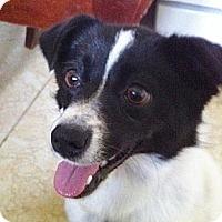 Adopt A Pet :: Panda - Saskatoon, SK