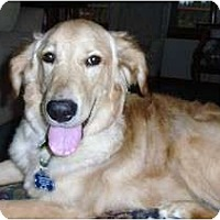 Adopt A Pet :: Trevor - Denver, CO