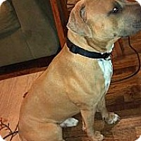 Adopt A Pet :: Bruce - Owasso, OK