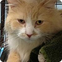 Adopt A Pet :: Coco - Monroe, GA
