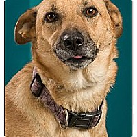 Adopt A Pet :: Sonia - Owensboro, KY