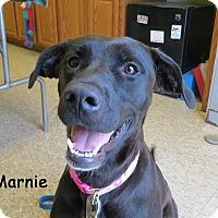 Adopt A Pet :: Marnie - Warren, PA