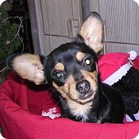 Adopt A Pet :: Frannie - Yucaipa, CA