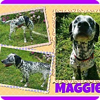 Adopt A Pet :: Maggie - Fort Collins, CO