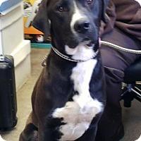 Adopt A Pet :: LEROY - Cadiz, OH