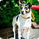 Adopt A Pet :: Timmy