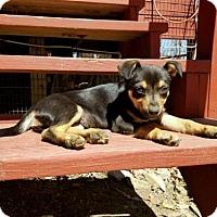 Adopt A Pet :: Ducky - Boston, MA