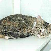 Adopt A Pet :: Kris - Bradenton, FL