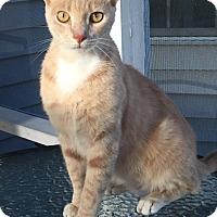 Adopt A Pet :: Fritz - Wilmington, NC
