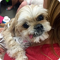 Adopt A Pet :: Georgia - Las Vegas, NV