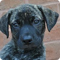 Adopt A Pet :: Reese - Atlanta, GA