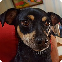 Adopt A Pet :: Sonny - Andalusia, PA