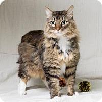 Adopt A Pet :: Leidy - Tulsa, OK
