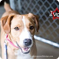 Adopt A Pet :: Ivan - Kendallville, IN