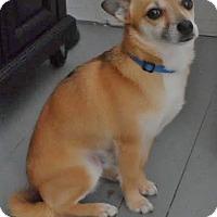 Adopt A Pet :: Hooper, happy & hopeful! - Snohomish, WA