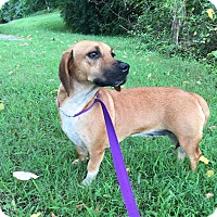 Adopt A Pet :: Bessie (Reduced Fee) - Washington, DC