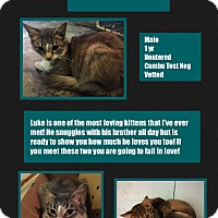 Adopt A Pet :: Luke - CLEVELAND, OH