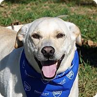 Adopt A Pet :: Teddy - Columbia, IL