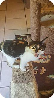 Calico Kitten for adoption in Griffin, Georgia - Dollie