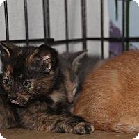 Adopt A Pet :: Brin - Ann Arbor, MI