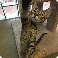 Adopt A Pet :: Lex - Westminster, CA