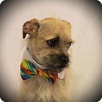 Adopt A Pet :: Starbuck - Carrollton, TX
