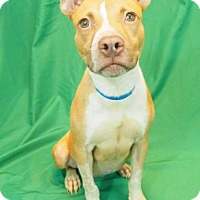 Adopt A Pet :: Chuck - New Orleans, LA