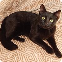 Adopt A Pet :: ALCHEMY - LEFT AT VET FOR EU! - Plano, TX