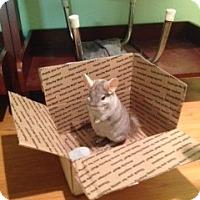 Adopt A Pet :: Eli - Granby, CT