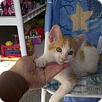 Adopt A Pet :: Marmalaide - Ocala, FL