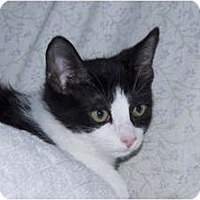 Adopt A Pet :: Diamond - New Egypt, NJ