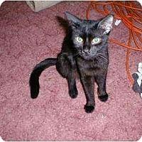 Adopt A Pet :: Jazzabelle - Proctor, MN