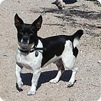 Adopt A Pet :: POPO - Scottsdale, AZ