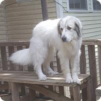 Adopt A Pet :: CELESTE - Paron, AR