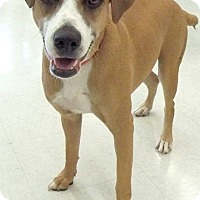 Adopt A Pet :: Pamela - Sterling Heights, MI