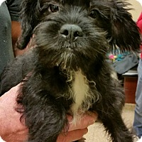Adopt A Pet :: Tucker - Fairview Heights, IL