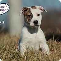 Adopt A Pet :: Olga - Lee's Summit, MO