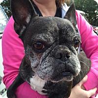Adopt A Pet :: Pearl - San Francisco, CA