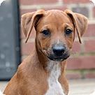 Adopt A Pet :: Dudley
