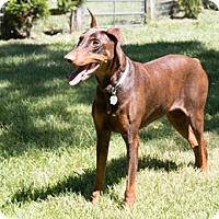 Adopt A Pet :: SEIJA - Greensboro, NC