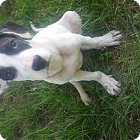 Adopt A Pet :: Fresca - Foristell, MO